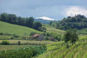 Snowy Cimone from savignano